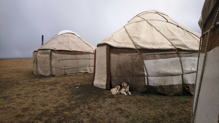 Hund liegt vor Jurte in Kirgisistan