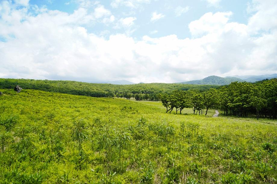 Blick auf die Landschaft im Shiretoko Nationalpark
