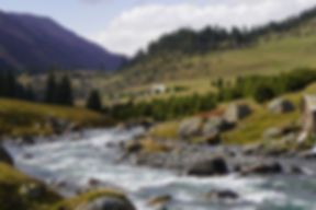 altyn arashan tal kirgisistan.jpg