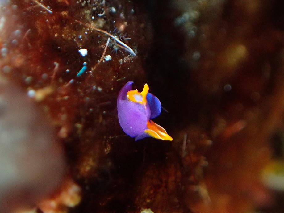 Makrofotografie unter Wasser