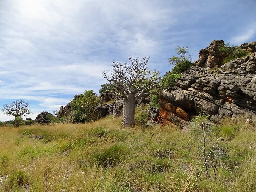 Rund um Fitzroy Crossing - Australien