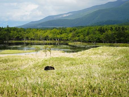 Shiretoko Nationalpark auf Hokkaido: Unberührtes Japan