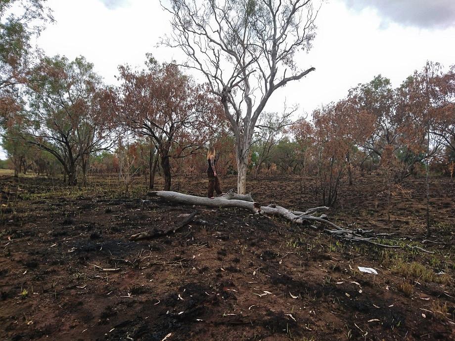Australien/Kimberleys - Karge Landschaft nach Buschbrand