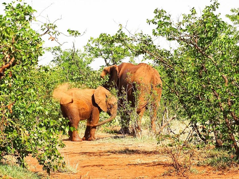 Mehr Elefanten - Botswana