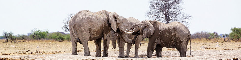 Botswana Reiseinfos Elefanten
