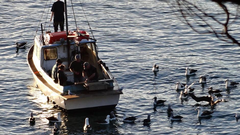 Fischerboot umringt von Albatrossen