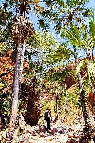 Australia Palmen bei der Bungle Bungle Range