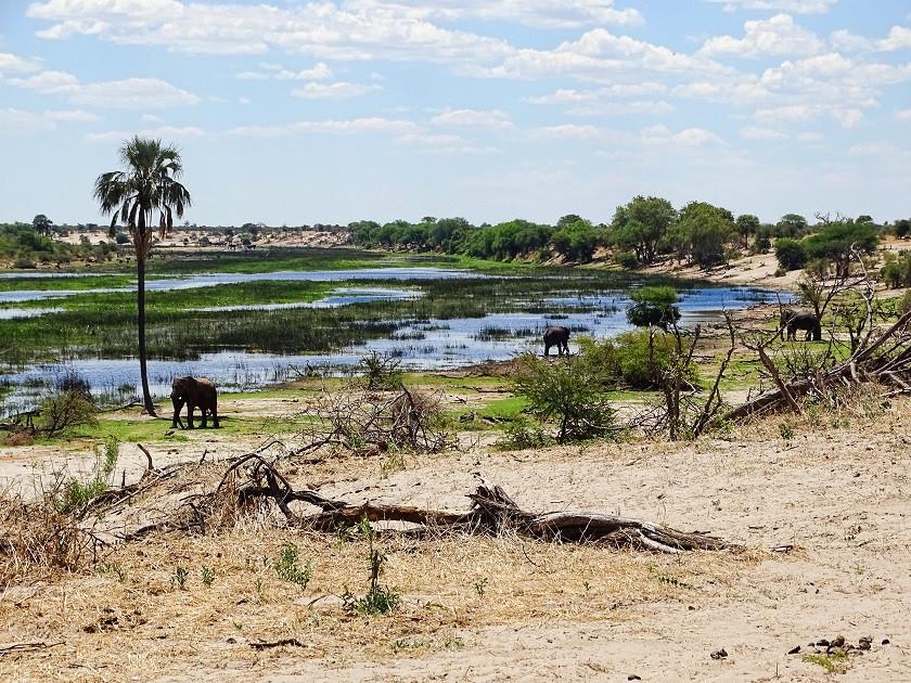 Elefanten im Boteti - Makgadikgadi Nationalpark