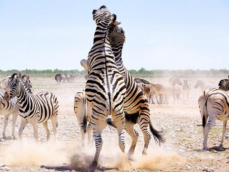 Etosha Nationalpark: Tipps für Selbstfahrer