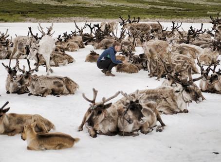 Reisebericht Mongolei: Eine Reise zu den Tsaatan Rentier Nomaden