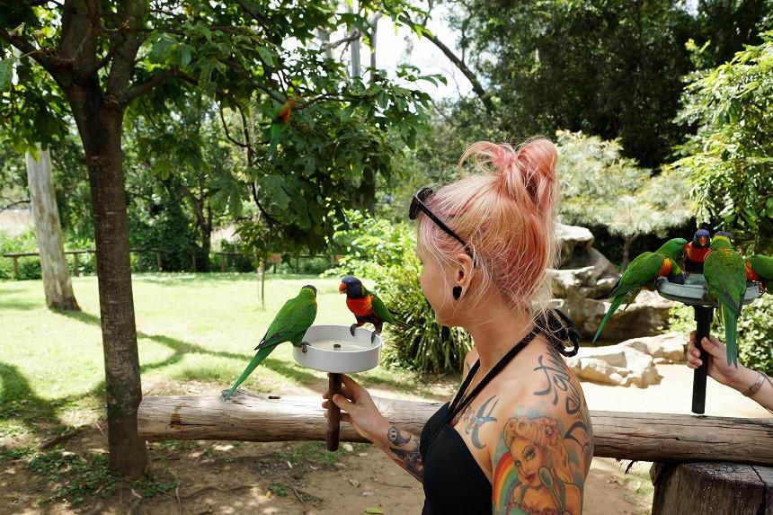 Wilde Papagaie bei der Fütterung