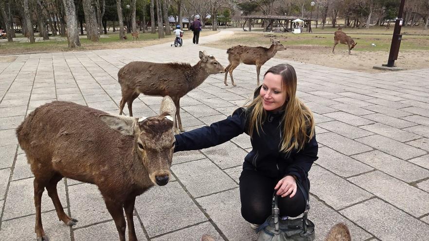 Heilige Rehe in Nara