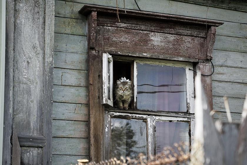 Katze im Fenster - Goldener Ring Russland