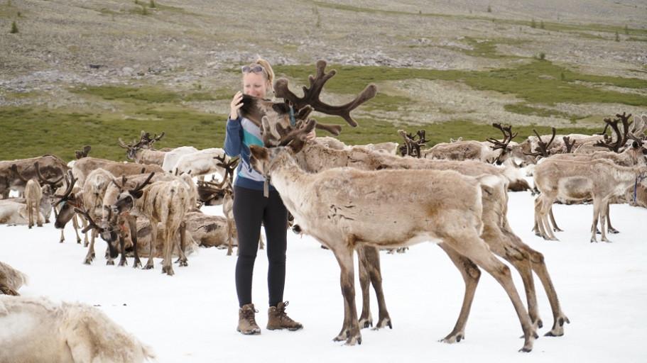 Zahme Rentiere lassen sich von Kati streicheln