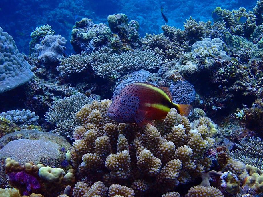 Bunte Fische und lebendige Korallen auf Aka Island