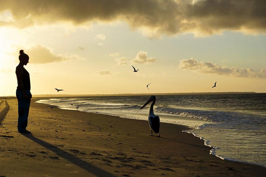 Pelikan am Rainbow Beach