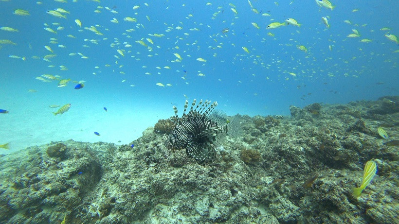 Tauchen auf Mauritius