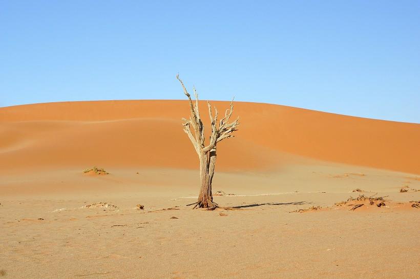 Toter Baum vor Sanddüne - Sossusvlei Namibia