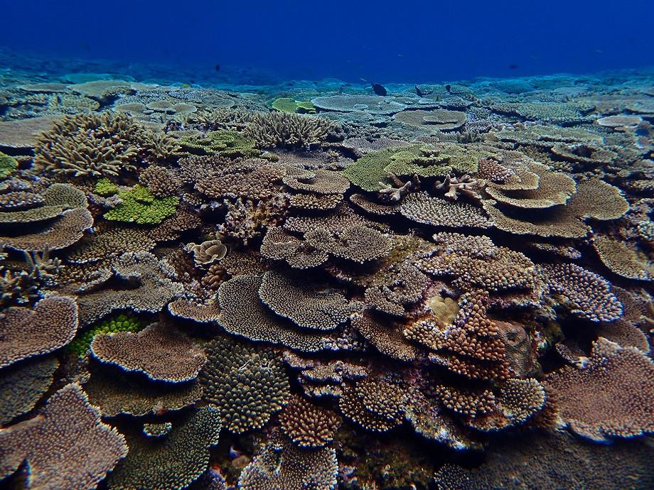 Bunter Korallenteppich vor Aka Island