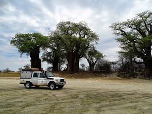 Bains Baobabs in Botswana.jpg