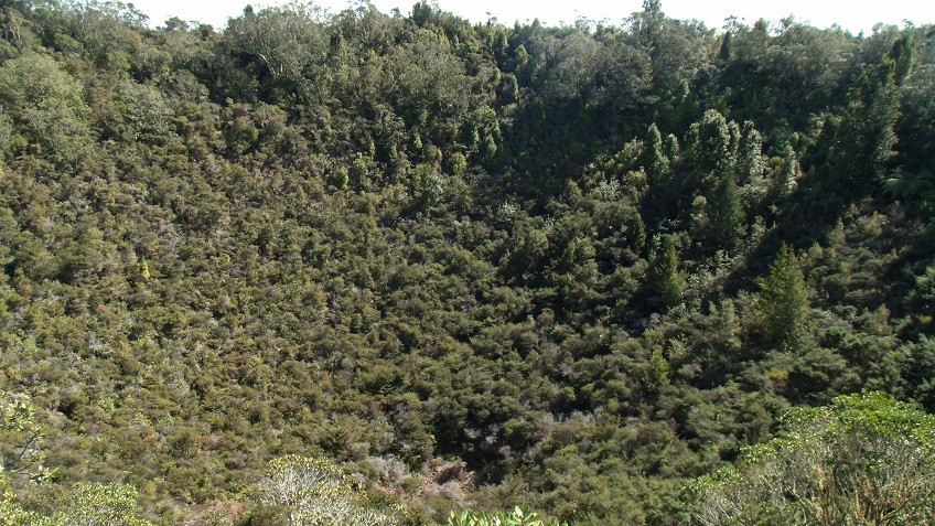 Rangitoto Krater
