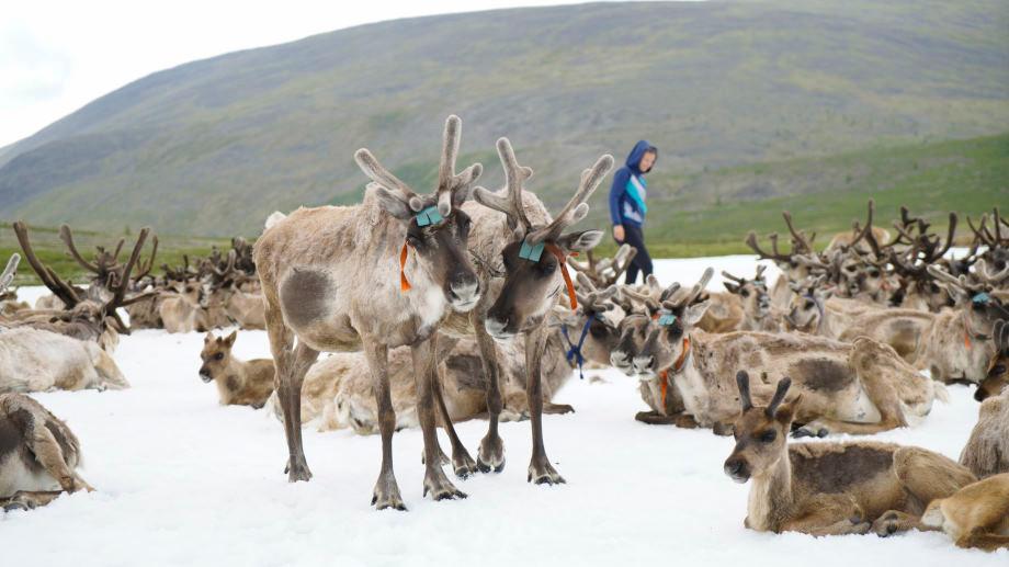 Rentiere und Kati in den Bergen der Mongolei