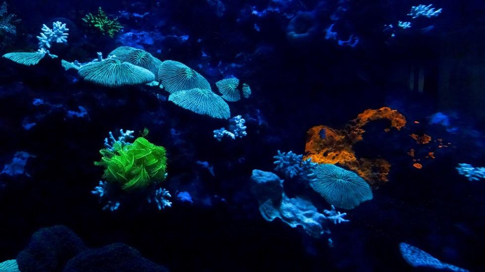 Fluoreszierende Unterwasserwelt - Churaumi Okinawa