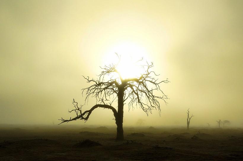 Gruseliger Baum im Nebel - Sossusvlei Namibia