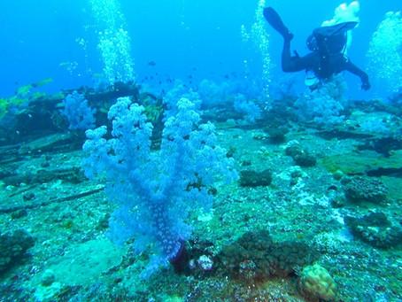 Tauchen auf Mauritius: 9 empfehlenswerte Tauchplätze