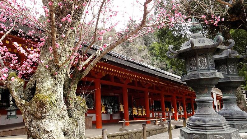 Im Inneren des Kasuga Taisha Schreins - Nara