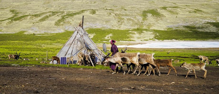 Mutter der Tsaatan Familie kehrt zum Camp zurück