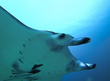 Tauchen auf Palau: Tipps zu Tauchbasen und empfehlenswerten Tauchplätzen