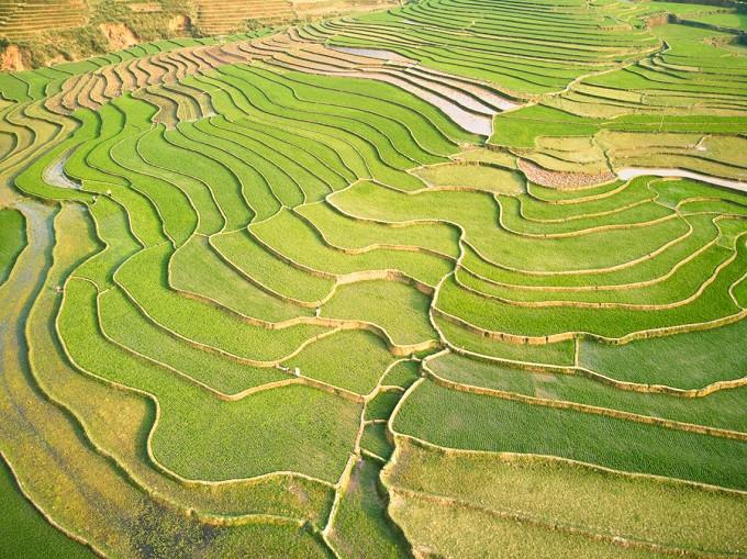 Reisfelder in Vietnam.jpg