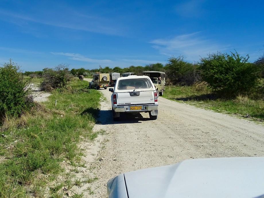 Stau bei einem Game Drive im Etosha Nationalpark in Namibia