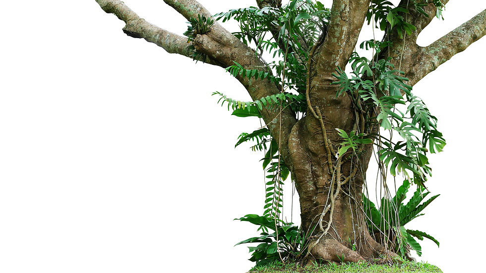 Jungle tree trunk with climbing Monstera