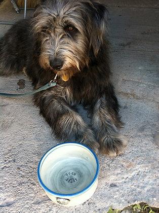 Custom Pet Bowls - Food Safe! $35 - $50 each