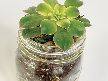 EASY MASON JAR TERRARIUM by Kelly Brown and Maya Haynie