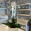 Thumbnail: White Phalaenopsis Orchids