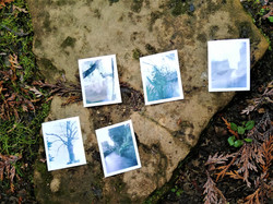 Instant pinhole photography prints