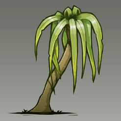 Ponytail palm.png