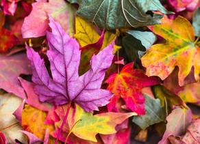 Tendencias moda otoño/invierno 2020-21