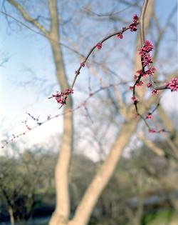 spike blossom 2005