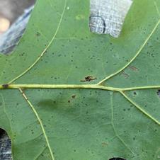 Leaf underside close-up