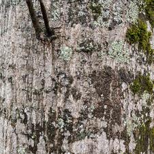 Mature bark