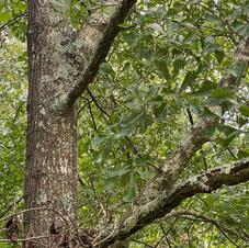 Bark and foliage