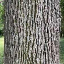 Bark close-up