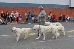 Stanwood / Camano Fair Parade