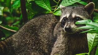 Le  Costa Rica, pays leader de l'éco-tourisme mondial