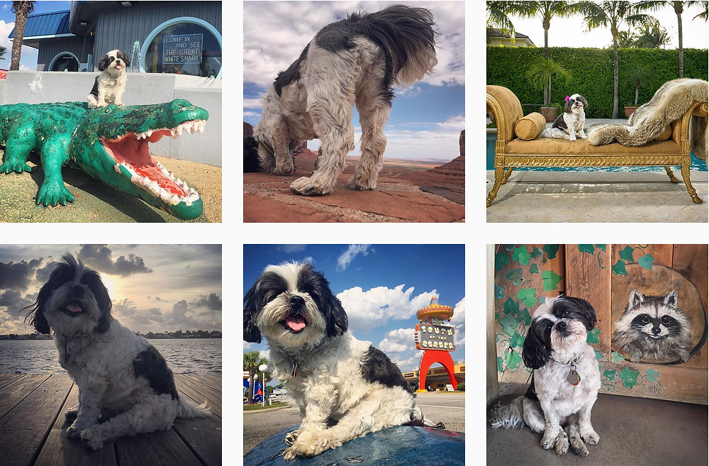 maggie's adventures Naomi Harris's dog