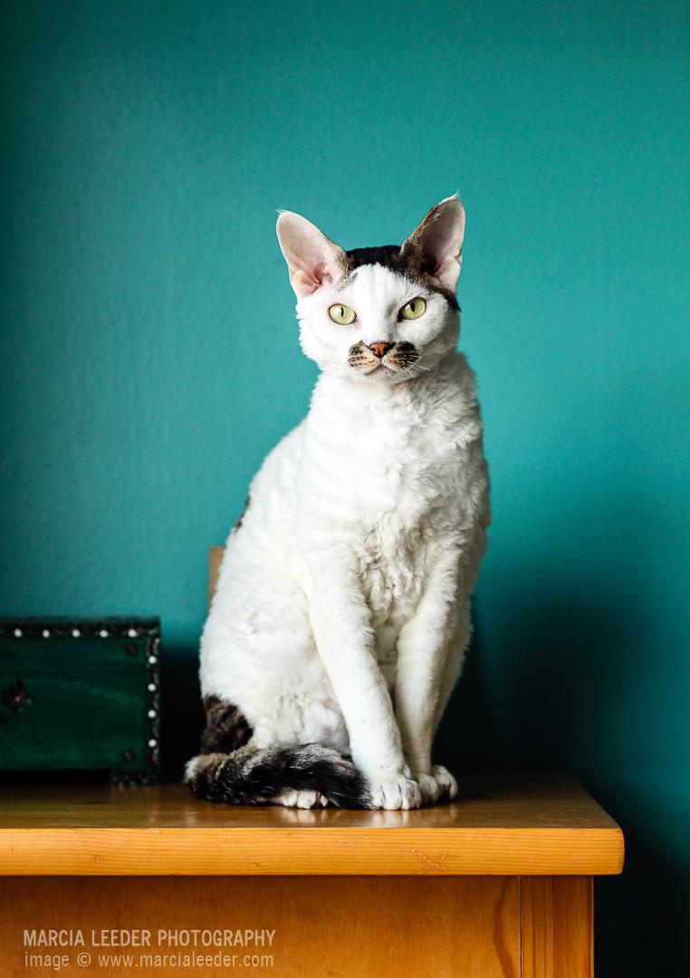 Marcia Leeder - Cat